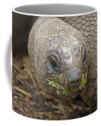 Giant Tortoise Coffee Mug