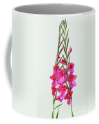 Gladioli Byzantinus In Love Coffee Mug