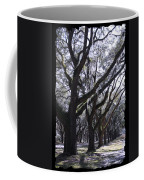 Glorious Live Oaks With Framing Coffee Mug