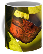 Gold Leaf In Fall Coffee Mug