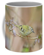 Goldcrest Coffee Mug