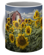 Golden Blooming Sunflowers With Red Barn Coffee Mug