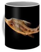 Golden Line Barbel Coffee Mug