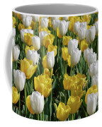 Gorgeous Blooming Field Of White And Yellow Tulips Coffee Mug