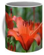 Gorgeous Blooming Orange Lily Flowering In A Garden Coffee Mug