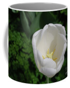 Gorgeous Blooming White Tulip Flower Blossom In Spring Coffee Mug