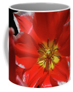 Gorgeous Flowering Red Tulip With A Yellow Center Coffee Mug