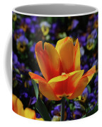 Gorgeous Flowering Yellow And Red Blooming Tulip Coffee Mug