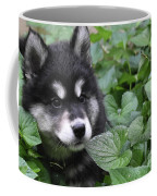 Gorgeous Fluffy Alusky Puppy Peaking Out Of Plants Coffee Mug