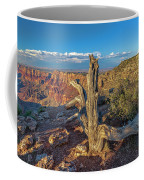 Grand Canyon Old Tree Coffee Mug
