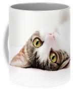 Grand Kitty Cuteness Coffee Mug