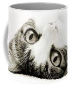 Grand Kitty Cuteness Bw Coffee Mug
