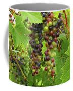 Grape Harvest Coffee Mug