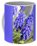 Grape Hyacinth Closeup Coffee Mug