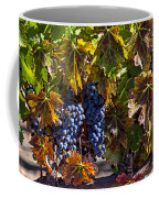 Grapes Of The Napa Valley Coffee Mug by Garry Gay