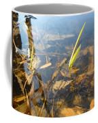 Grass Spears In Still Water Coffee Mug