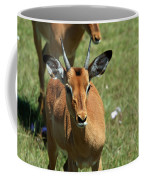 Grassland Deer Coffee Mug