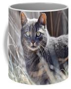 Gray Cat In Woods Coffee Mug