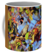 Gray Catbird Framed By Fall Coffee Mug