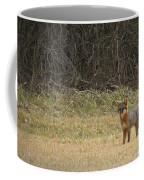 Gray Fox In Lower Pasture Coffee Mug