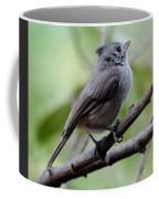 Gray Grey Bird 052814aa Coffee Mug