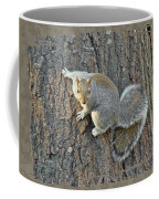 Gray Squirrel - Sciurus Carolinensis Coffee Mug