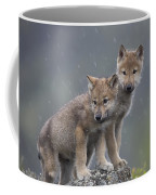 Gray Wolf Canis Lupus Pups In Light Coffee Mug