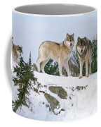 Gray Wolves Canis Lupus In A Forest Coffee Mug