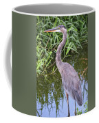 Great Blue Heron Closeup Coffee Mug