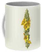 Great Mullein  Coffee Mug