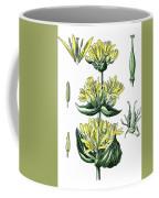 great yellow gentian, Gentiana lutea Coffee Mug