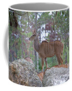 Greater Kudu Female - Rdw002756 Coffee Mug