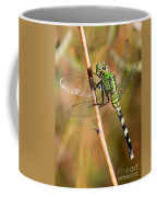 Green Dragonfly Closeup Coffee Mug