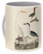 Green Heron, Night Heron, Young Heron, And Great White Heron Coffee Mug