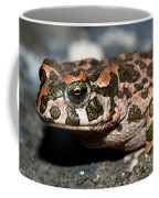 Green Toad Coffee Mug