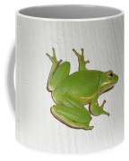 Green Tree Frog - Hyla Cinerea Coffee Mug