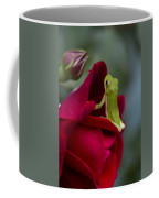 Green Tree Frog And Red Roses Coffee Mug