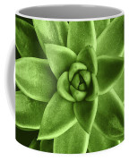 Greenery Succulent Echeveria Agavoides Flower Coffee Mug