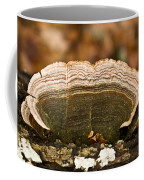 Grey Bracket Fungi Coffee Mug