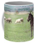 Grey Foal On Pasture Farm Scene Coffee Mug
