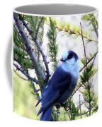 Grey Jay In A Juniper Tree Coffee Mug