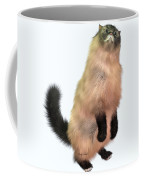 Grey Tabby Cat Coffee Mug by Corey Ford