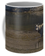 Grey Wolf In The Yellowstone River-signed-#4363 Coffee Mug