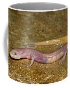 Grotto Salamander Coffee Mug