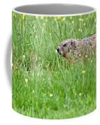 Groundhog In A Field Of Flowers Coffee Mug