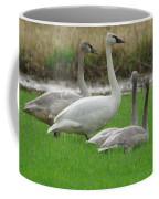 Group Of Young Swans Coffee Mug