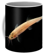 Guanan Groundwater Loach Coffee Mug