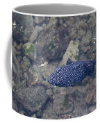 Guineafowl Pufferfish Coffee Mug