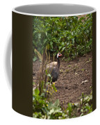 Guineahen Looking For Food Coffee Mug