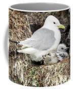 Gull Adult And Chick On Cliff Coffee Mug